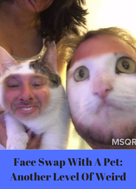 http://www.mycrazyemail.net/2018/10/face-swap-with-pet-another-level-of.html