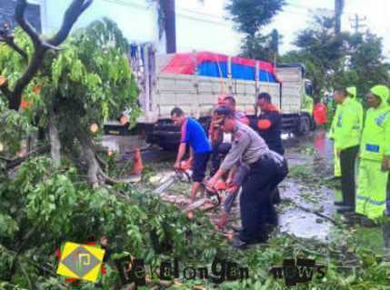 Batang Dihajar Hujan Deras Dua Jam Puluhan Tiang Listrik Dan Pohon Tumbang