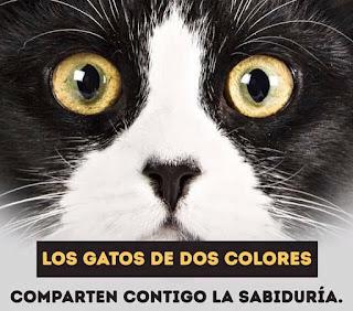 Los gatos de dos colores