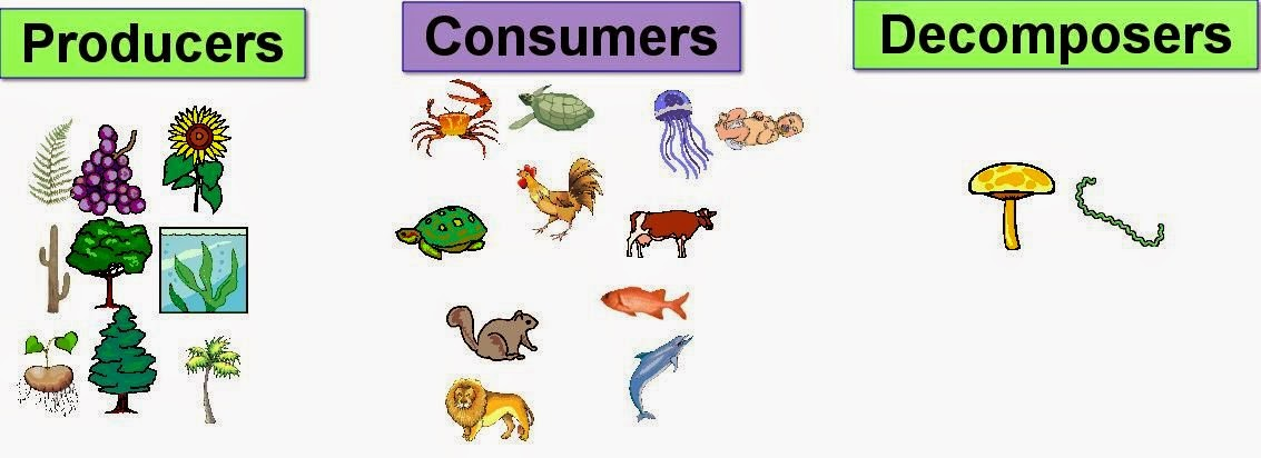 Science Online The Type Of The Living Organisms According To Their