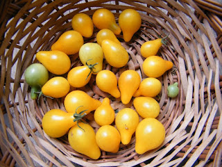 Yellow pear-shaped tomatoes by Sylwia Ufnalska