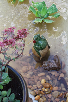 Our pond - click on image to see the transformation