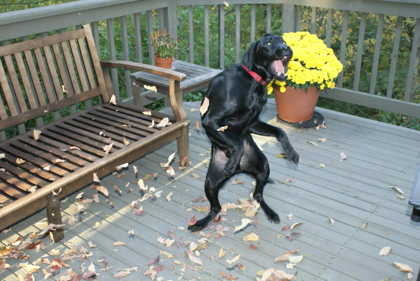 Amazing Creatures: Cute dogs - part 197 (50 pics)