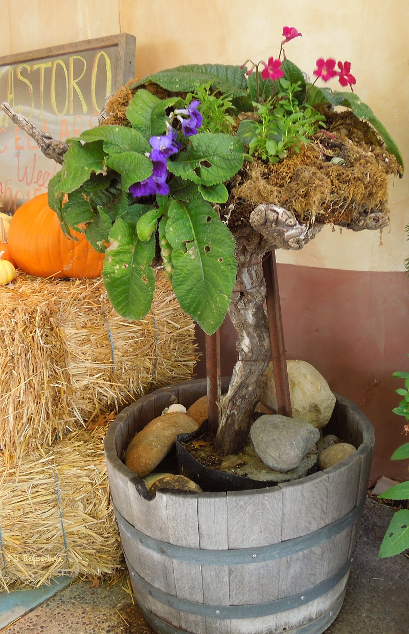 Unusual Planter at Castoro Cellars in November, © B. Radisavljevic