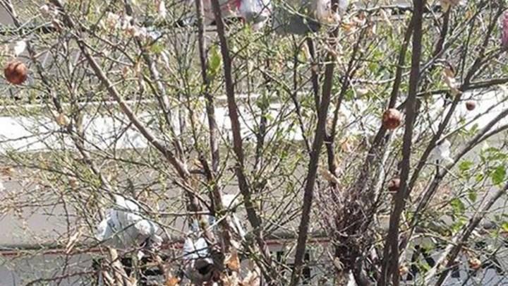 To δέντρο που αντί για φύλλα έχει... σκουπίδια - ΦΩΤΟ
