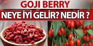 goji meyvesi nedir faydaları nelerdir