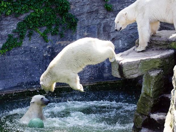حديقة الحيوان(Frankfurt Zoo)