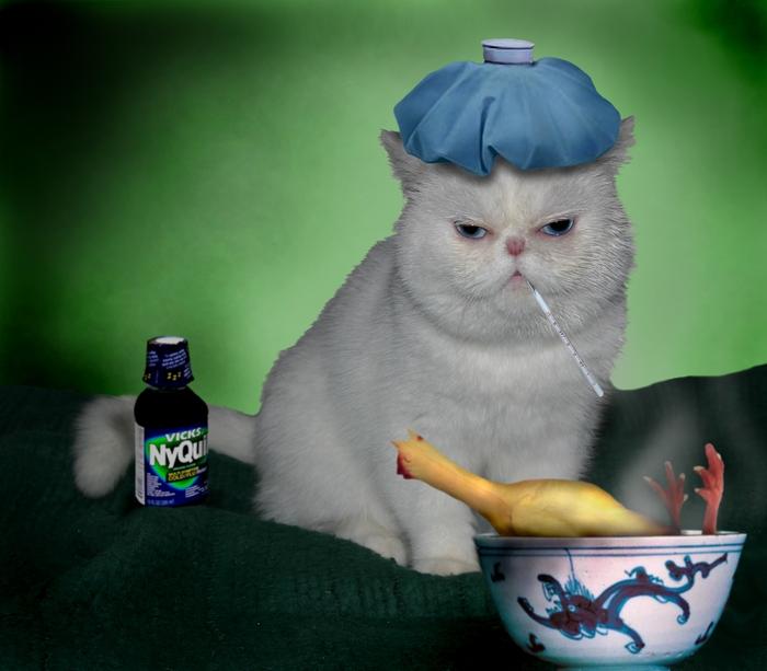 Image result for ormekur til kat