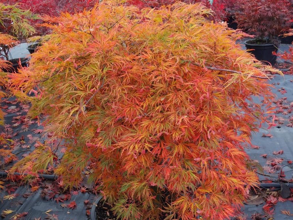 Flora Wonder Blog Cultivars Not Yet Assessed
