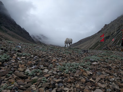 Kailash Manasarovar Yatra via Lipulekh Pass (PART 8)