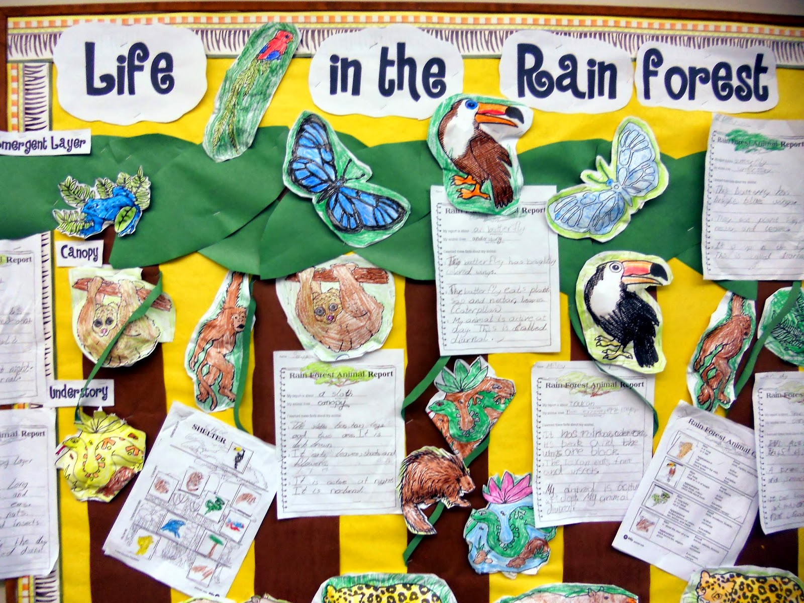 Jnelson S First Grade Blog The Rain Forest Shapes And A
