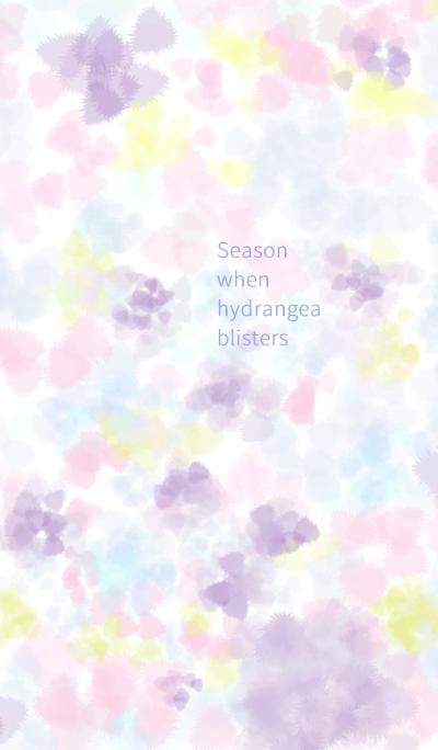 Season when hydrangea blisters