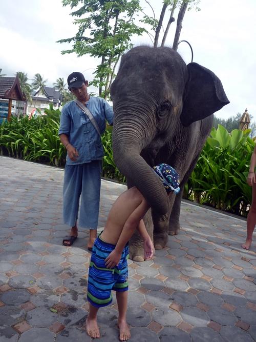 エレファントキッス Elephant kiss
