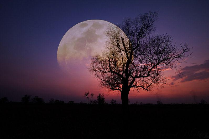 BANCO DE IMÁGENES: La Luna Y El árbol