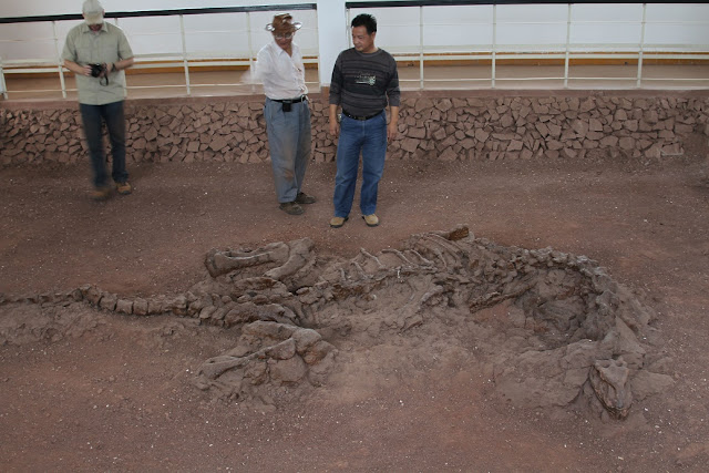 Dinosaur rib bones reveal remnants of 195-million-year-old protein