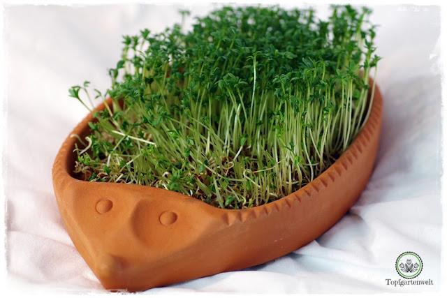 Gartenblog Topfgartenwelt Brot aus dem Dampfbackofen: Butterbrot Hausbrot mit Butter und Kresse