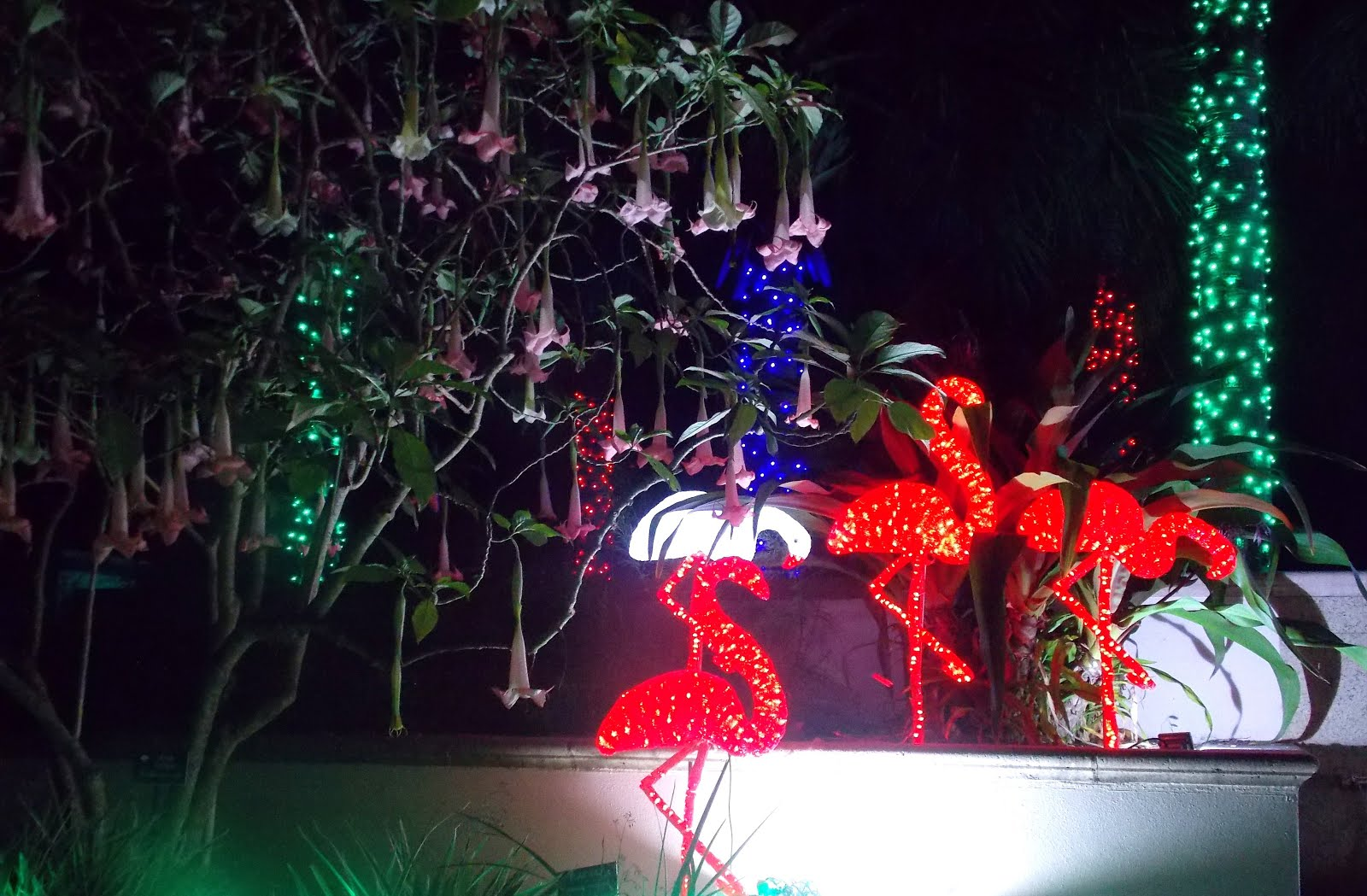 The schramm journey christmas events in pinellas county - Largo botanical gardens christmas lights ...