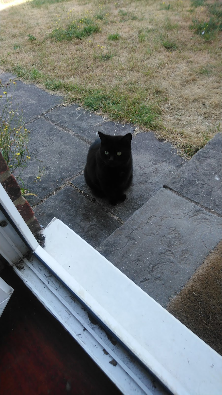 Www. Sweet chatte noire