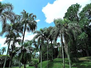 Palmeiras Imperiais - Jardim Botânico de Porto Alegre