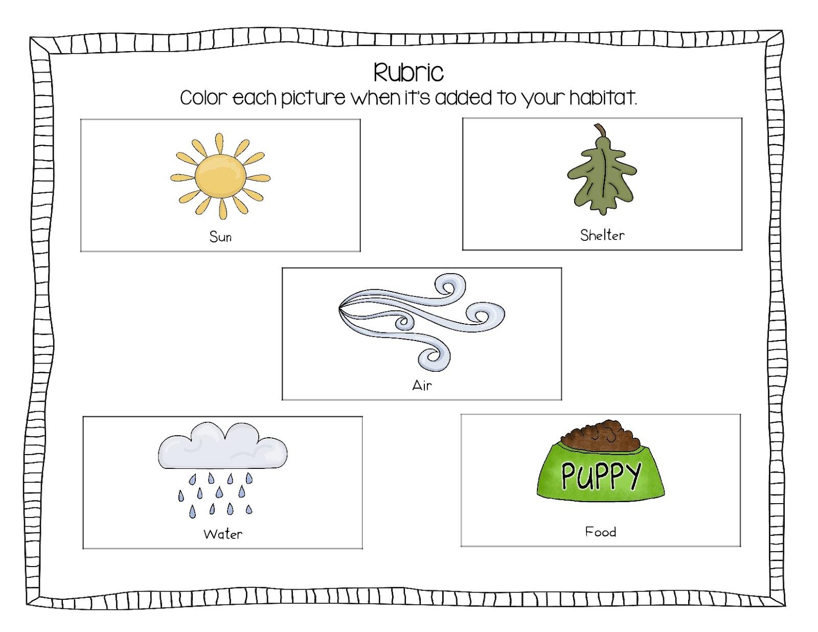Sprinkles To Kindergarten Amazing Animals