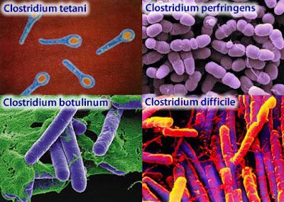 clostridium botulinum toxine)