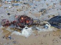 Wow! Sosok Mayat Mirip Putri Duyung Terdampar di Pantai