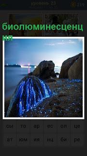 светящееся биолюминесценция на берегу
