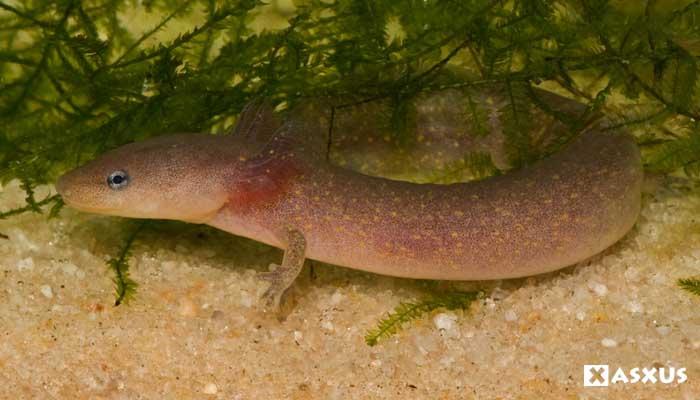 10 Contoh Hewan Amfibi Beserta Gambar dan Ciri-Cirinya
