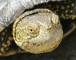 Il giardino delle naiadi tartarughe nel laghetto for Tartarughe vaschetta