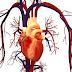 Cara Merawat Jantung dan Mencegah Penyakit Jantung