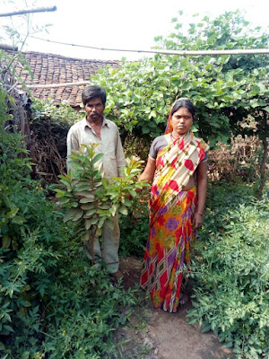 Planting 51000 fruit trees for marginal farmers in villages around Lalitpur, Bundelkhand, Uttar Pradesh, Central India