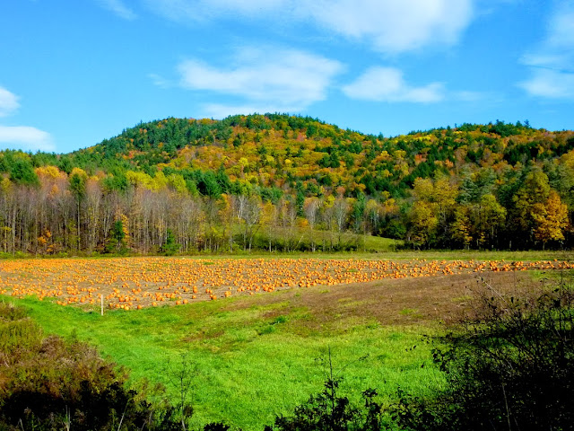 Campo de calabazas en Winslow Farms, Vermont