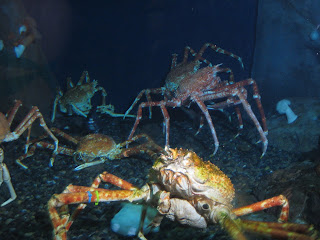 Crabs - Georgia Aquarium | Two Hectobooks