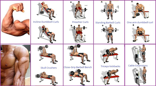 Best Exercises For Building Arm Mass