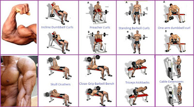 Best Bicep Workout Program to Guarantee the Biggest Biceps