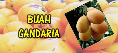 Cara menanam Pohon Buah Gandaria dari biji, manfaat buah gandaria bagi kesehatan, Cara menanam buah gandaria agar cepat berbuah, Budidaya buah gandaria yang baik dan benar, Tanaman Buah,