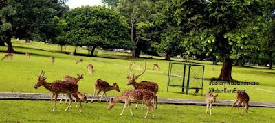 Kebun Raya Bogor | Objek dan Tempat Wisata di Bogor