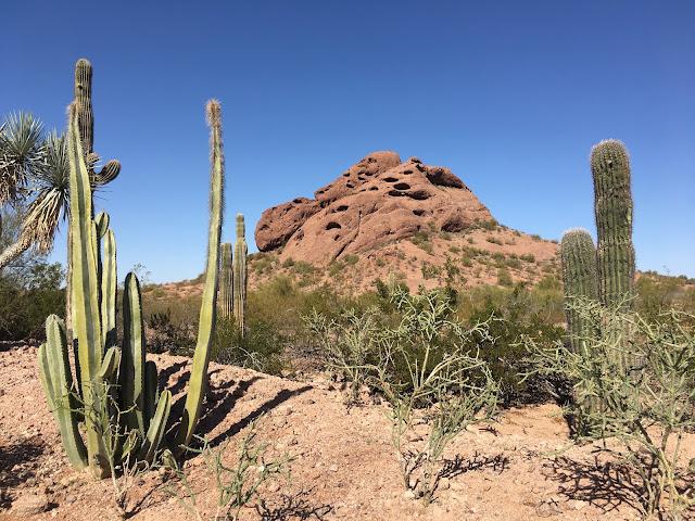 Papago Park Cactus