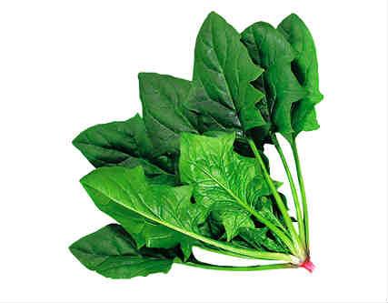 Espinacas hojas puntiagudas en fichas de plantas