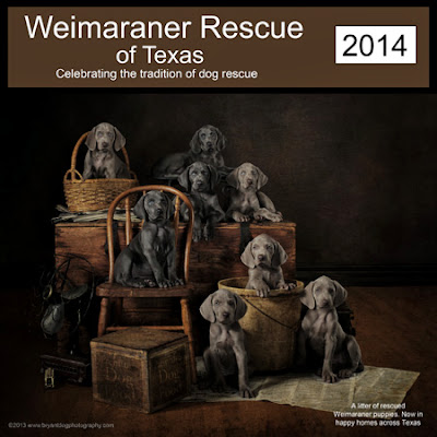 Weimaraner Rescue of Texas - 2014 calendar