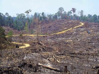 belajar untuk menjaga lingkungan Kerusakan Lingkungan