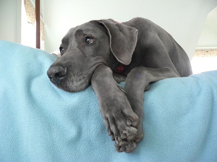 7527e5995530 Blog - Get Up and Go Dog - Arthritis, Hip Dysplasia, Joint Problems etc