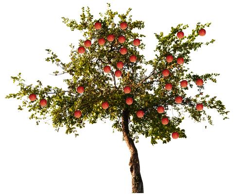 les secrets de la taille et de la greffe des arbres fruitiers bio 11 08 15. Black Bedroom Furniture Sets. Home Design Ideas