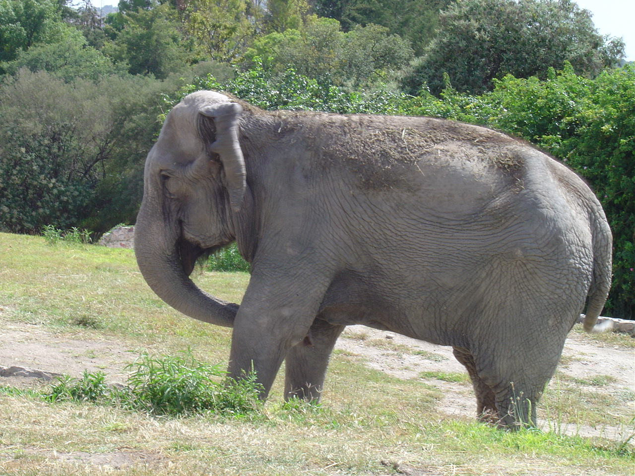 animales terrestres - photo #17