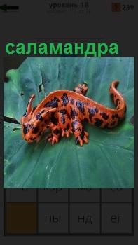На большом зеленом листе ползет саламандра коричневого цвета с черными пятнами