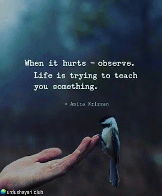 When It hurts--Observe.  Life Is Trying To Teach  You Something...!!  #quotes