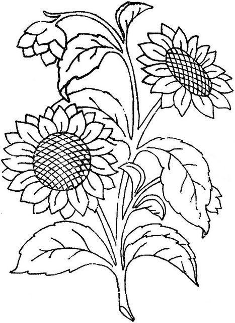Kleurplaten Zonnebloemen.Efie Goes Zentangle Maanduitdaging Voor De Maand Augustus