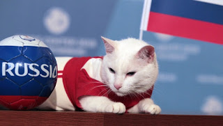 Hermitage cat-oracle Achilles will give a forecast for the match Russia-Egypt