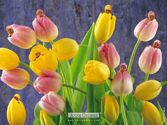 Bebés dentro de tulipanes.
