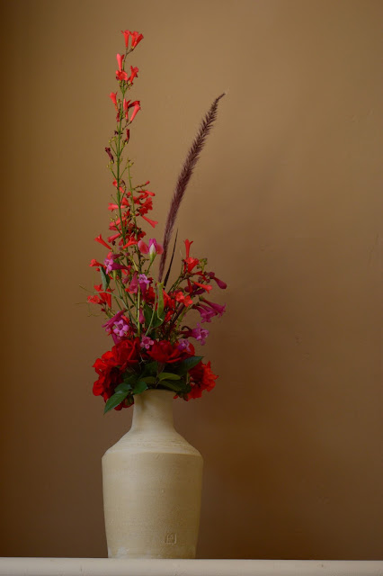 desert garden, small sunny garden, amy myers, monday vase meme, penstemon pseudospectabilis, russelia, rose daniela, pennisetum